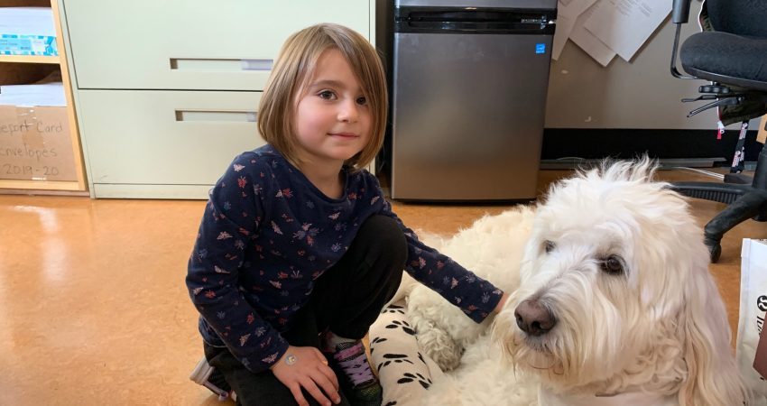 Moose the therapy dog visit Quadra and gets a pat from Hayden